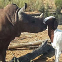 Unusual Animal Friendships — S. African Casino Shares Animal Rescue Stories
