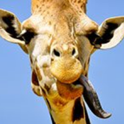 South African Wildlife — Fun Facts and Free Spins
