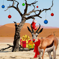 Springolph the Christmas Springbok has Gifts for South African Casino Players